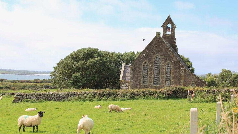 Sheep beside English Church 2012